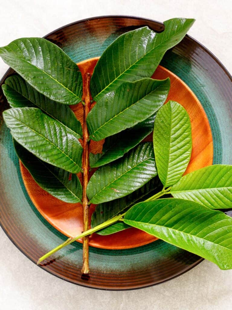 Foraged guava leaves on a plate.