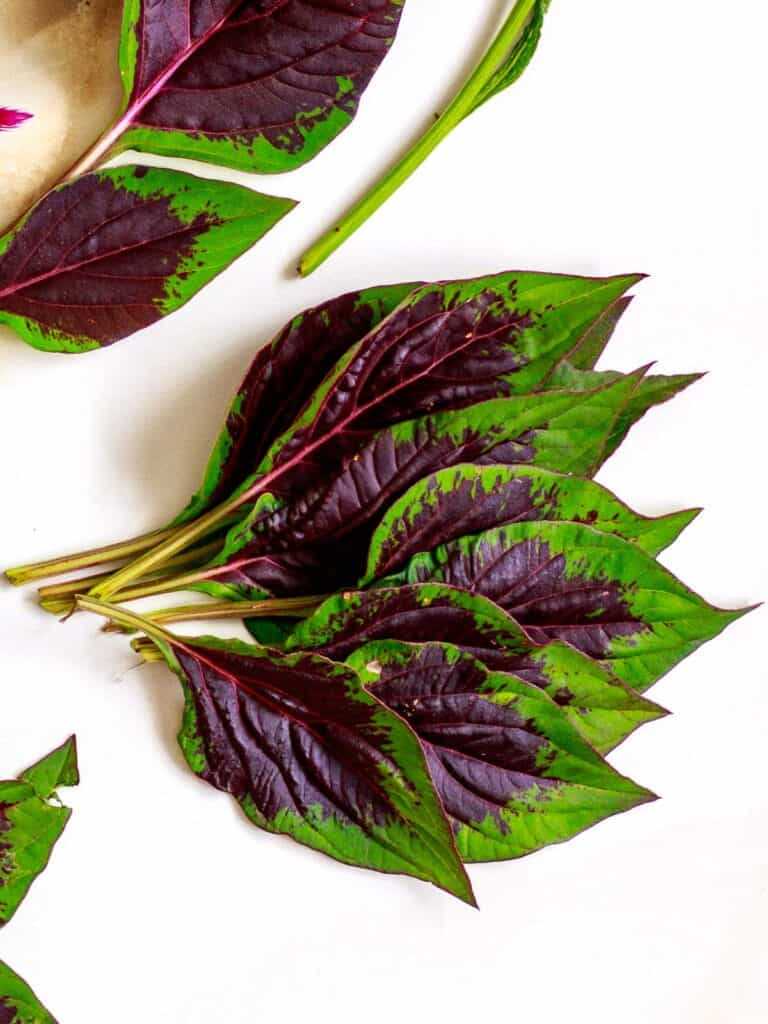 Leaves of Nigerian spinach plant for cooking.