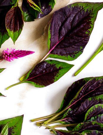celosia argentea spinach plant close up
