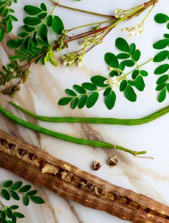 moringa tree moringa oleifera